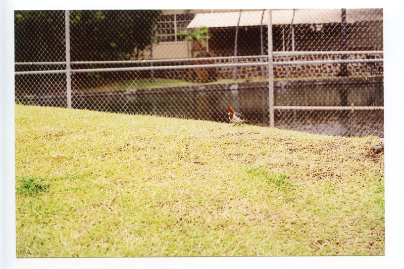 Lehua Bike Path, Pearl City, Hawaii. Konica II Rangefinder. © 2011 Bobby Asato