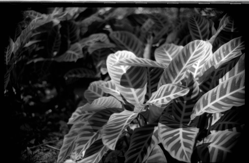 Hawaiian Tel Building, Manoa, Hawaii. Canon A-1. © 2011 Bobby Asato.