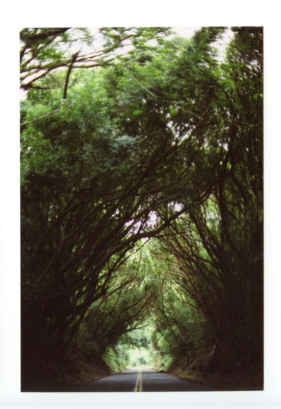 Old Pali Road, Hawaii. Canon F-1 original © 2012 Bobby Asato